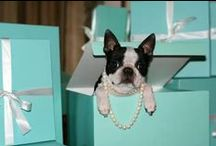♥ Animaux ♥ / Mostly, pictures of Boston Terriers & dogs.. and other animals I find cute or beautiful!