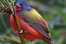 Texas Birds / by Anahita Gorbe