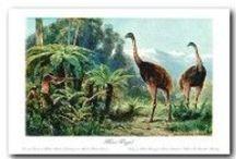 Extinct & Endangered Animals / Historical pictures and illustrations of extinct amd emdangered animals