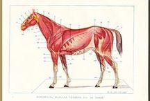 Antique scientific illustrations / Interesting pictures of old scientific equipment etc