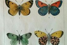 Bugs, butterflies etc / Mostly antique and vintage artworks showing bugs,butterflies,spiders,beetles etc