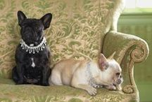 Pets / If you're into aw-inducing pet photos and ways to better connect and take care of the pet in your life, look no further. Tag your own pet tips (and adorable photos) using #MarthaStewartPets.