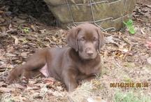 Bailey, The Furr Baby