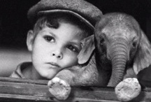 Elephant or Irrelephant / If you would like to post to this board please send an email with a link to your profile iamritumehta@gmail.com. Happy pinning!