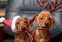Pet Christmas / Christmas photography ideas for pets