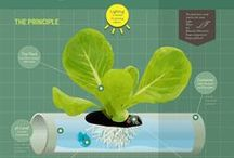 planted w/ hydroponics / by Hilary Riggins