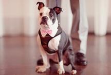 Weddings ~ Pets at Weddings