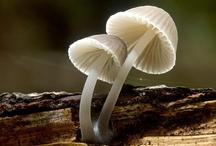 Fungi / by Rebecca Moore