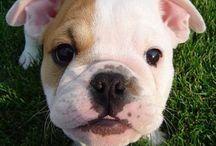 I want !