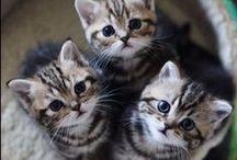 kitties / the sweetest kitties from the whole world plus mine :)