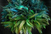 Weddings - Peacock / .