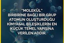 Genel Kültür / Genel Kültür. Görsel Bilgi Kaynağı