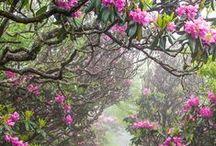 Příroda / Krajiny, rostliny, zvířata, ...