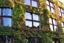 壁面緑化 vertical green