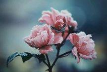 ΦΩΤΟΓΡΑΦΙΑ / PHOTO
