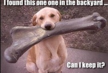 Funny Pet Pictures with Captions / Collection of funniest pet pictures with captions. Funny silly pet pictures, funny memes of cats and dogs, funny pet photos with funnier captions. / by Funny Pet Pictures