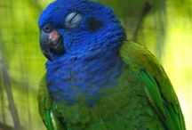 Birds and Animal / Beautiful Birds and Cute Animals