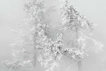 Theme :: WinterTree / Trees in winter - photos, artworks and everything in this theme