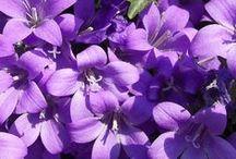Colors :: Purple