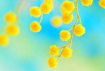 flowers・plants