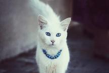 Cats >^.^<