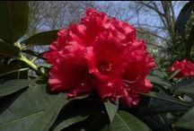 Flowers / Różne miejsca, zdjęcia pięknych kwiatów. Zdjęcia robione z pasji przyrodą - niektóre z podejściem artystycznym, niektóre wcale niekoniecznie :-), Tak, dla zabawy :-)