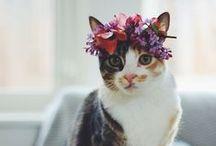 Kitty Kätzchen Miau Miau :* / Kätzchen, Kätzchen, Kätzchen und nochmal Kätzchen