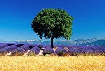 France/provence