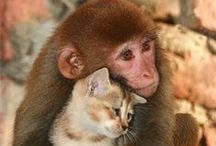 Beautiful Animals / Beautiful creatures that we share our planet with.