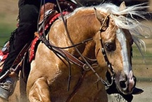 Reining / Horses from the sport of reining