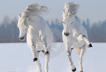 MAJESTIC HORSES / by Chandra Saettel
