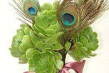 Succulent Bouquets / Unique arrangements with succulents.