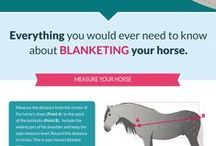 Horse-related infographics / Horse related visualizations and infographics