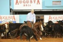 2014 Augusta Cutting Futurity / Coverage of the 2014 Augusta Cutting Futurity