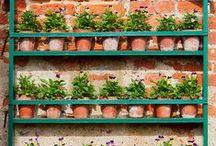 Berkebun, tanaman hias, buah, sayuran dll / berkebun dengan berbagai macam media dan teknik untuk pemula