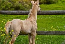 Horses♡♥