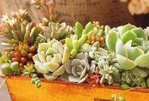 入賞作品「春を彩る多肉植物寄せ植えフォトコンテスト」