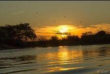 Pantanal Matogrossense / Fotografias registradas durante minha hospedagem no Sesc Pantanal