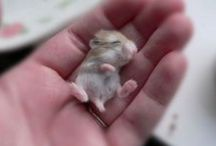 The Cutest Thing! / There's nothing that can brighten a day quite like seeing a cute animal.