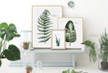 GREEN / 식물 데코