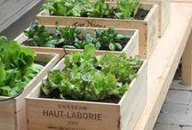 Organic living.