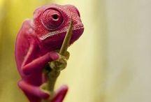 Unusual wildlife / Faune et flore insolite / Les animaux, plantes et insectes insolites que l'on rencontre en voyage ou que l'on rencontrera peut-être un jour...  http://www.globe-trotting.com/