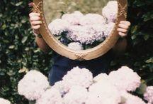garden/flower