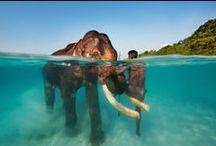 Over-Under Water - A la surface de l'eau / Over Under Water - A la surface de l'eau