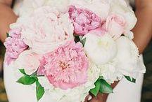 >> Beauté des fleurs <<