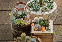 Florescer / Vida vegetal
