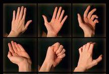 Руки и кисти