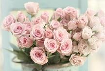 ♥ flowers & plants ♥