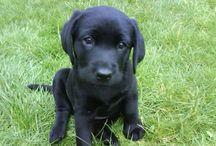 Doggy Heaven