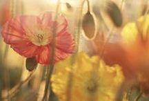 Bloemen ♡ / Verse bloemen in huis, heerlijk! Het maakt je huis een 'thuis'...